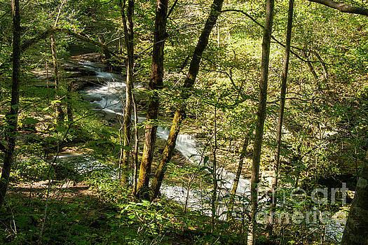 Bob Phillips - Cascading through the Trees