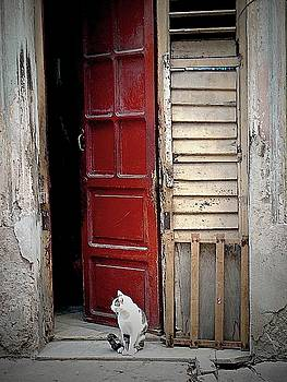 Cat At Red Door by Toni Abdnour