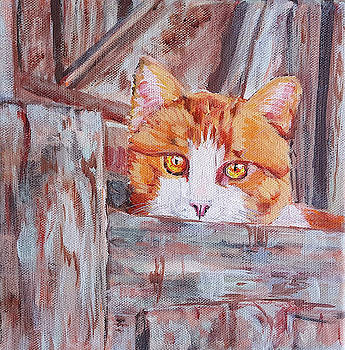 Cat Behind a Fence by Phyllisha Hamrick