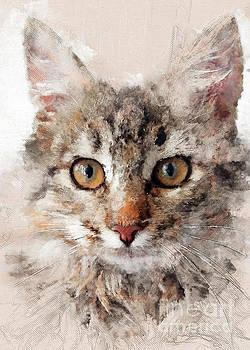 Cat Cinder by Justyna JBJart