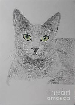 Feline portrait  by Cybele Chaves