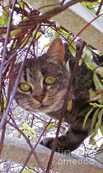 Sharon Williams Eng - Cat in the Arbor