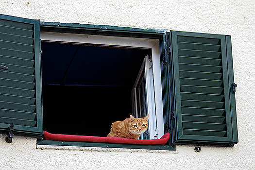 Cat in Upper Window by Sally Weigand