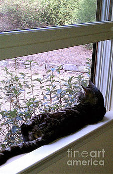 Sharon Williams Eng - Cat on the Window Perch