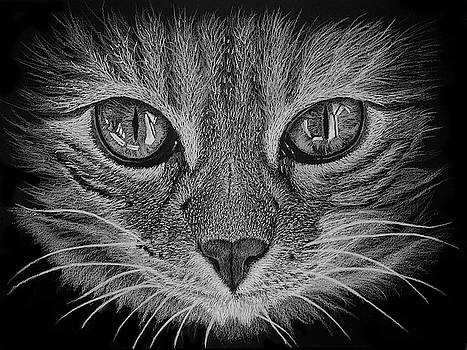 Cat Portrait by Jeff Burcher
