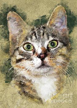 Cat Tiger  by Justyna JBJart