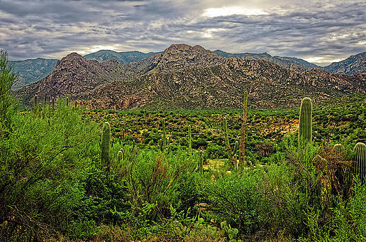 Catalina Foothills h1130 by Mark Myhaver
