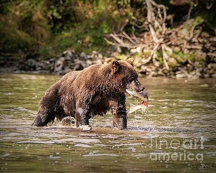 Catching Breakfast - Bears by Jan Mulherin