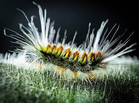 Caterpillar by Silvia Marcoschamer