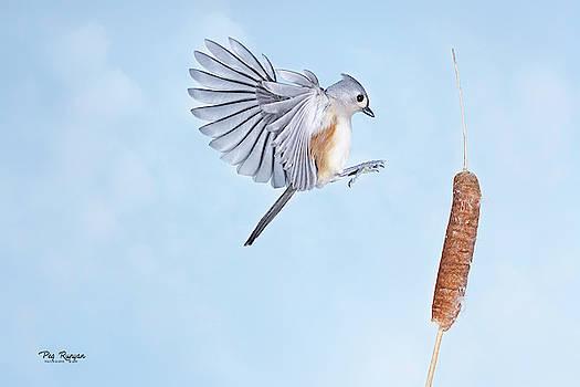 Cattail Landing by Peg Runyan