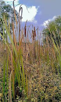 Cattails Tall by Alida M Haslett