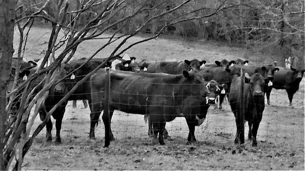 Cattle  by Peggy Leyva Conley