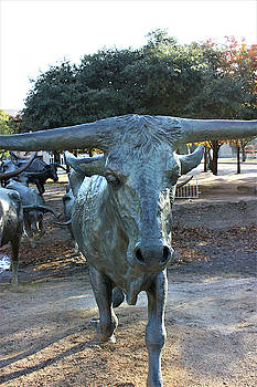 Cattle Statue at Pioneer Park, Dallas, Texas  by Deborah Kinisky