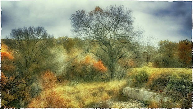 Natural Abstract Photography - Cattle Trough