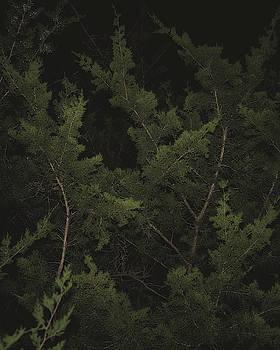 Cedar Branches In The Dark by Philip A Swiderski Jr