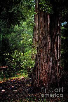 Cedar Forest by Pamela Moran