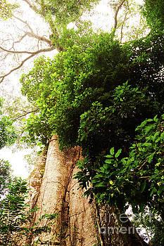 Ceiba by Cassandra Buckley