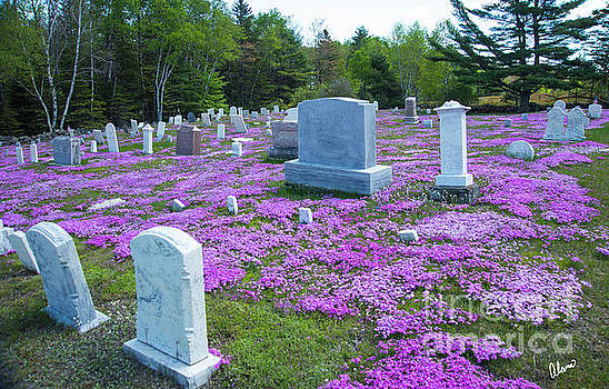 Cemetery Flowers by Alana Ranney