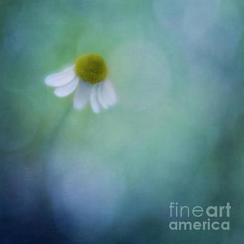 Chamomile Blossom by Priska Wettstein