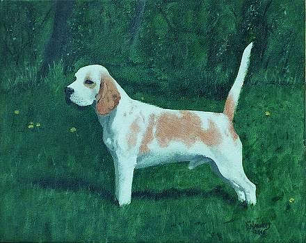 Champion Beagle by David Hawkes