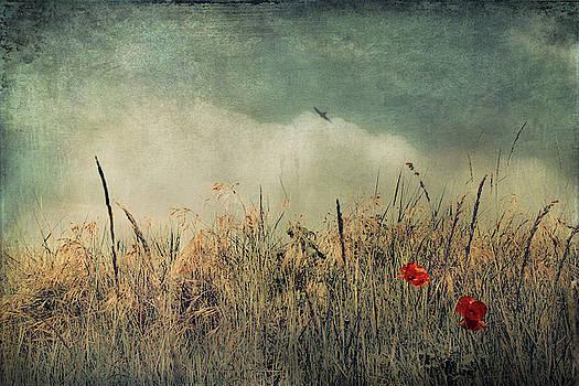 Chaos And Beauty by Dirk Wuestenhagen