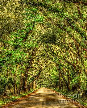 Charleston S C The Tree Tunnel Botany Bay Road Edisto Island South Carolina Landscape Art by Reid Callaway