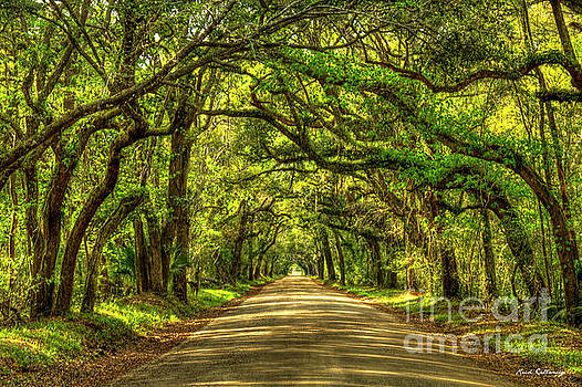 Charleston S C The Road Home Botany Bay Road Edisto Island South Carolina Landscape Art by Reid Callaway