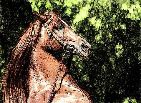 Charli Portrait of A Stallion,  by Karl-Heinz Luepke