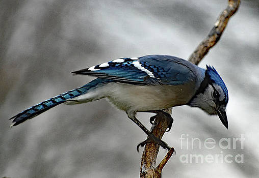 Cindy Treger - Hey Betty, Is That You?  Blue Jay