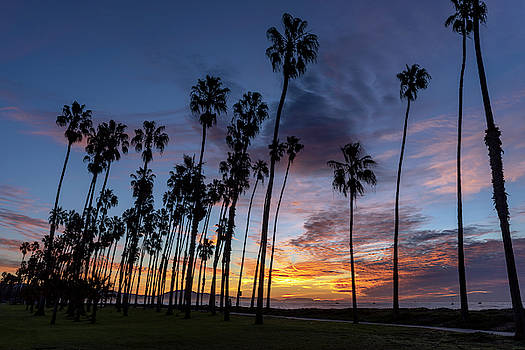 Chasing Palms by Sean Foster
