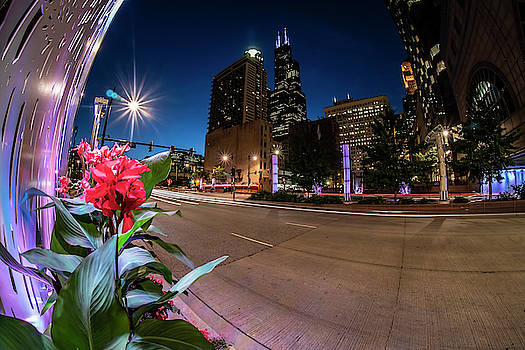 Chicago skyline and flowers at dusk  by Sven Brogren