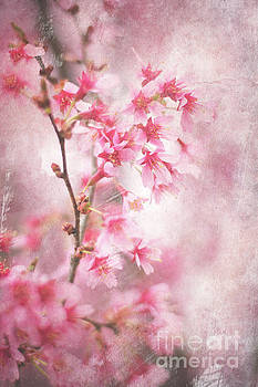 Cherry Blossom 0404B by Howard Roberts
