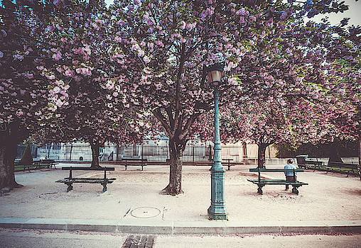 Cherry blossoms by Laurent Derossi