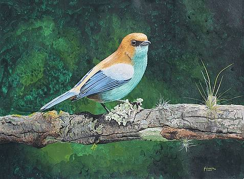 Chestnut-backed Tanager by Nelson Hammer