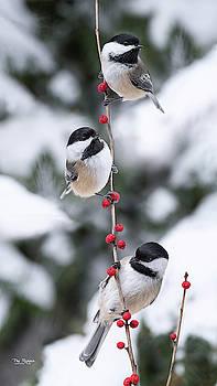 Chickadee Three by Peg Runyan