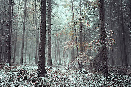 Chill in Wintry Woods by Jenny Rainbow
