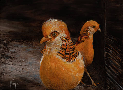 Chinese Golden Pheasant by Kathy Knopp