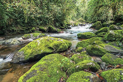 Chiriqui Rain Forest Stream by Jackson Ball