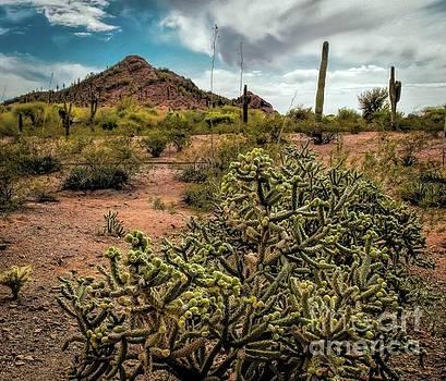 Cholla View by Jon Burch Photography