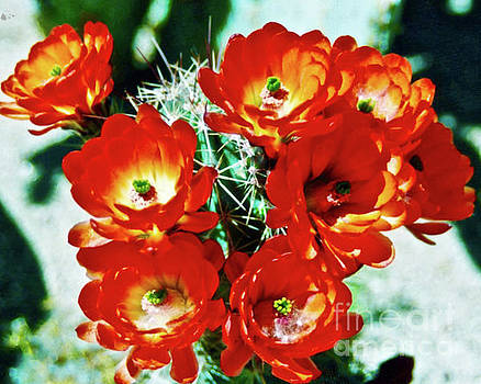 Claret Cup Cactus by Jerome Stumphauzer