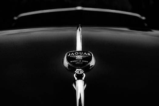 Classic Jaguar in Classic Black and White by Joy McAdams