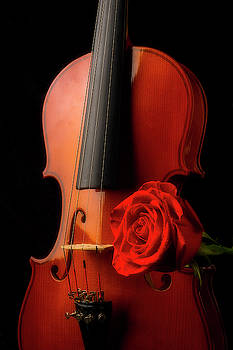 Classic Violin And Red Rose by Garry Gay