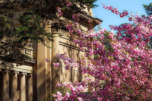 Classical Sakura by Bonnie Follett