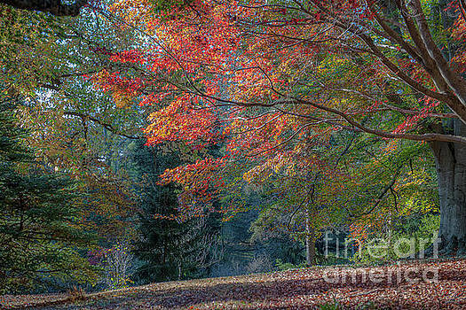 Dale Powell - Classically Elegant Autumn Colors