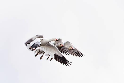 Close Quarter Flying by Jeff Phillippi