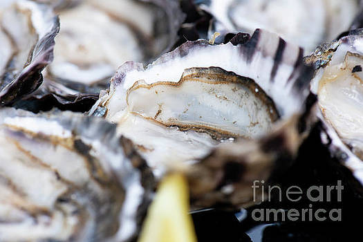 Closeup of fresh shucked oysters. by Rob D
