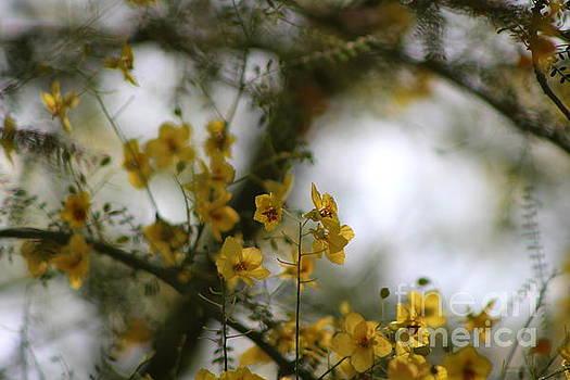 Closeup of Palo Brea Tree In Morning Sun by Colleen Cornelius