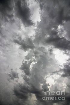Cloud Dragon by Nicki Hoffman