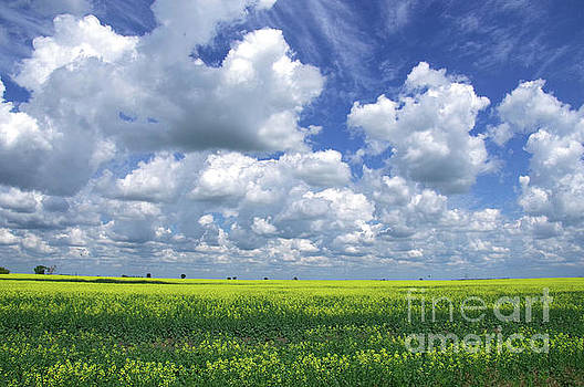 Clouds over a field of yellow flowers  by Jeff Swan