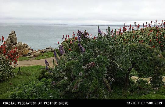 Coast Vegetation by Marte Thompson